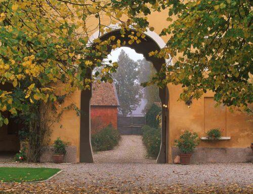 Le bacche che colorano l'autunno